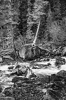 Tangle Creek