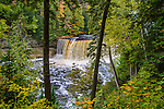 The Very Picturesque Tahquamenon Falls Framed By Trees And Lush Foliage In Autumn, Michigan's Upper Peninsula, USA