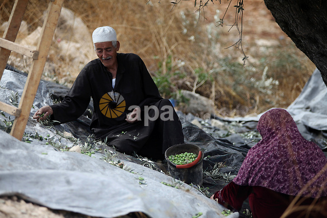 A Palestinian farmer with his wife collect olives at an olive orchard in the village of Ein Sinia near the West Bank city of Ramallah, 15 October 2014. Regional farmers are harvesting their olives this year from mid-October until 01 November. According to figures issued by the United Nations some 80,000 Palestinian families earn their income from growing olives in plantations which reportedly occupy about 48 per cent of the agricultural land in the West Bank and Gaza strip. About 93 percent of the olive harvest pressed to oil with the rest being used in soap production. Photo by Shadi Hatem