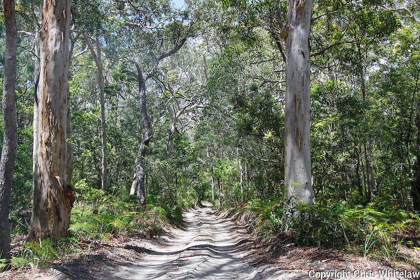 35_Freshwater Road 4WD Track