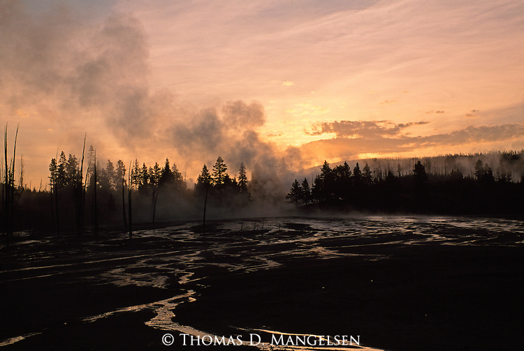 Steam rises around silhouetted trees in Yellowstone National Park, Wyoming.