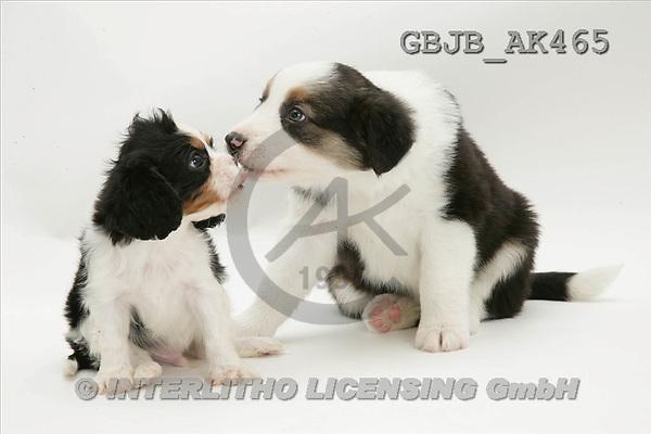Kim, ANIMALS, fondless, photos(GBJBAK465,#A#) Tiere ohne Fond, animales sind fondo