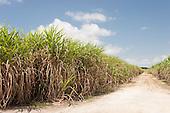 Alagoas State, Brazil. Dirt road through sugar cane fields.