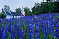 evening at lupine field behind St. Matthews chapel, Sugar Hill, New Hampshire