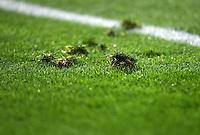FUSSBALL CHAMPIONS LEAGUE  SAISON 2015/2016 VIERTELFINAL RUECKSPIEL Atletico Madrid - FC Barcelona       13.04.2016 Rasenstuecke im Vicente Calderon Stadion