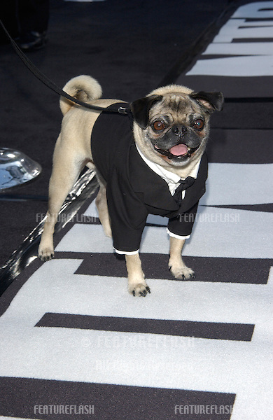 MUSHY the dog at the Los Angeles premiere of his new movie Men in Black II..26JUN2002. © Paul Smith / Featureflash