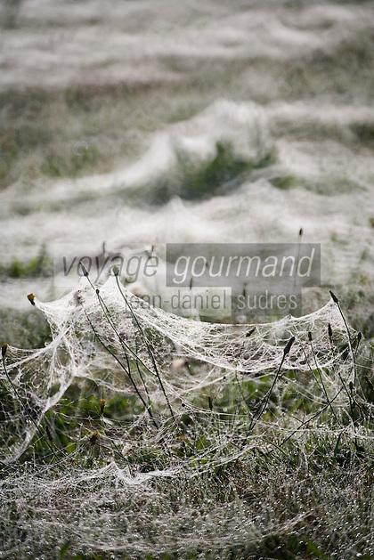 Europe/France/Aquitaine/40/Landes/Nauton: Rosée du matin et toiles d'araignées dans les champs