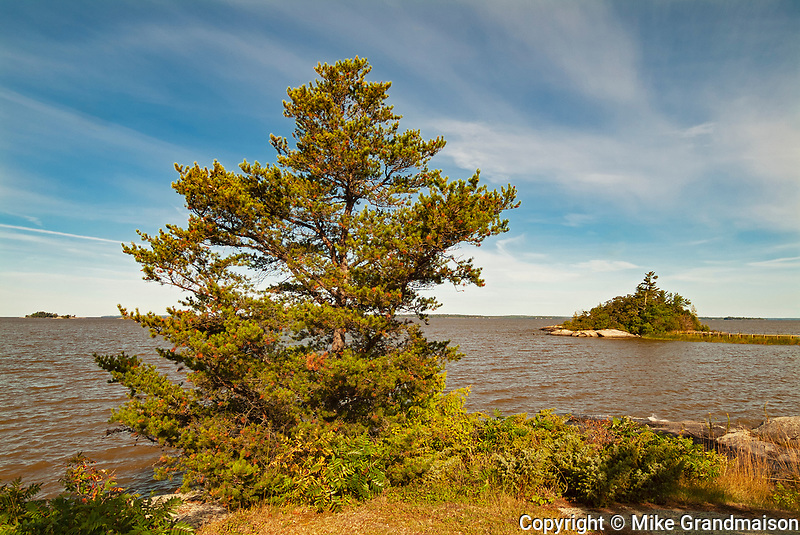 Jack pine on rocky shore of Lake of the Woods<br />Morson<br />Ontario<br />Canada