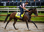 September 2, 2020:  Storm the Court exercises as horses prepare for the 2020 Kentucky Derby and Kentucky Oaks at Churchill Downs in Louisville, Kentucky. The race is being run without fans due to the coronavirus pandemic that has gripped the world and nation for much of the year. Evers/Eclipse Sportswire/CSM