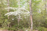 NJ, Belleplain State Forest