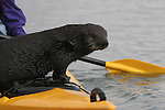wild sea otter on kayak at Elkhorn Slough