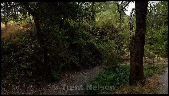 walking path and trees in San Ramon<br />