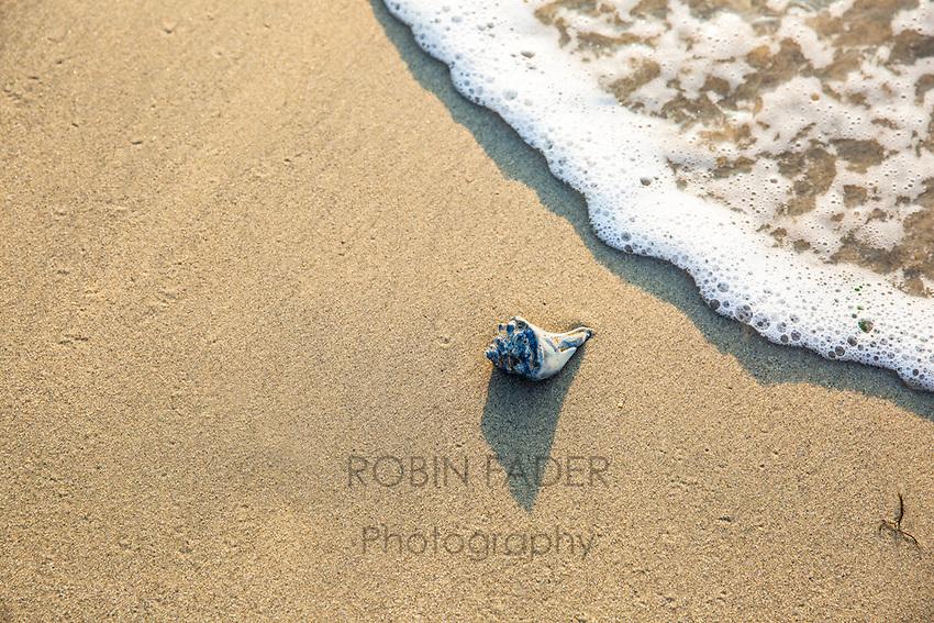 Sea art, single shell.
