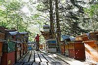 Camlihemsin: Mustafa Memoglu owns 200 modern hives that he has set up on a 4-metre high platform near his house to protect them from bears. The forest around Camlihemsin and up to the high pasture lands have a large bear population. Hunting bears is forbidden in the Kaçkar Dağları National Park. The animals are numerous: bears, wolves, coyotes, foxes, deers, boars, martins, rabbits, ermines, ferrets. The Kaçkar Dağları National Park was created in 1994 and it comprises 52,970 hectares of the most rich prairie land in Turkey, Mount Kaskar culminating at 3937 metres and pasture land as high as 3000 metres altitude.///Camlihemsin: Mustafa Memoglu possède ainsi 200 ruches modernes qu'il a installées sur une plateforme à 4 mètres de hauteur près de son habitation pour les protéger des ours. Les forêts autour de Camlihemsin et jusqu'au pâturages d'altitude ont a population d'ours importante. La chasse à l'ours est interdite dans le Parc National de Kaçkar Dağları .Les animaux sont nombreux, ours, loups, coyotes, renards, chevreuils, sangliers, martres, lapin, hermines, furets. Le parc National de Kaçkar Dağları  a été crée en 1994 et il compte 52 970 hectares des plus riches prairies de Turquie, le mont Kaskar culmine à 3937 mètres et les pâturages s'élèvent jusqu'à 3000 mètres.