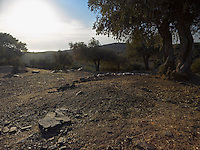OR_LOCATION_45158