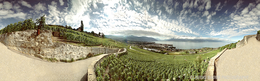 Switzerland, Vaud Region, Vevey; Vineyard, Nestlé