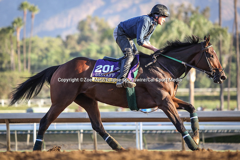 October 28, 2014: Don't Tell Sophia gallops in preparation for the Breeders' Cup Distaff at Santa Anita Park in Arcadia, California on October 28, 2014. Zoe Metz/ESW/CSM