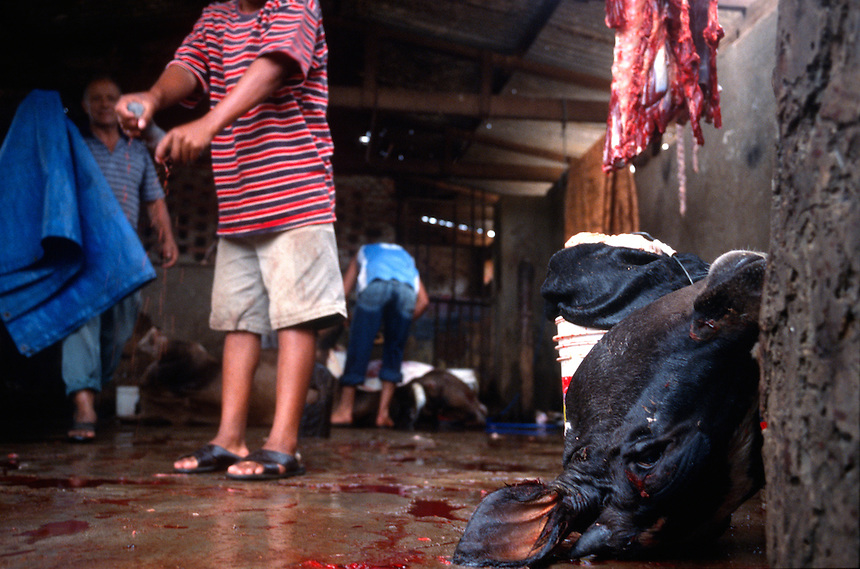 "Campesinos butcher steers in a communal slaughterhouse in Los Negros, Bolivia Friday, Nov. 12, 2004. Ernesto ""Che"" Guevara was captured by the Bolivian army in 1967 in a nearby valley and executed in La Higuera days later. His body was put on public display in the laundry room of the Vallegrande hospital, then secretly buried under the air strip for 30 years. Guevara and fellow communist guerillas were attempting to launch a continent-wide revolution modeled on Guevara's success in Cuba in the late 1950s. The Bolivian government recently began promoting the area where he fought, was captured, killed and burried for 30 years as the ""Ruta del Che,"" or Che's Route. (Kevin Moloney for the New York Times)"