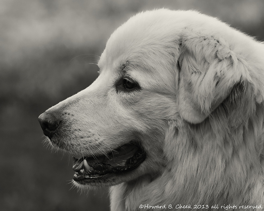 Jed in a B&W profile portrait.