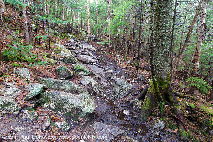 An area along the Mt. Tecumseh Trail in Waterville Valley, New Hampshire during the spring of 2017 that is in desperate need of drainage work. Over the last six years, there has been over a quarter of a mile of stonework done on this trail, but this high priority area has been ignored. Trail maintenance organizations say high priority areas of a trail are first and foremost.