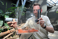 Olivier Marquis, soigneur animalier de la section elevage du Vivarium, vient placer les fourmis champignonieres dans leur installation de la Grande Serre, new Parc Zoologique de Paris, or Zoo de Vincennes, (Zoological Gardens of Paris, also known as Vincennes Zoo), Museum National d'Histoire Naturelle (National Museum of Natural History), 12th arrondissement, Paris, France. Picture by Manuel Cohen