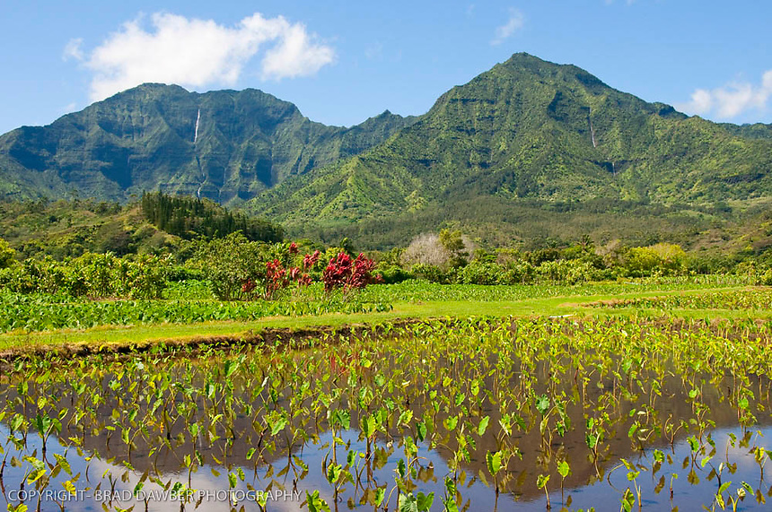 Taro fields , Namolokama, Mamalohoa, Hanalei