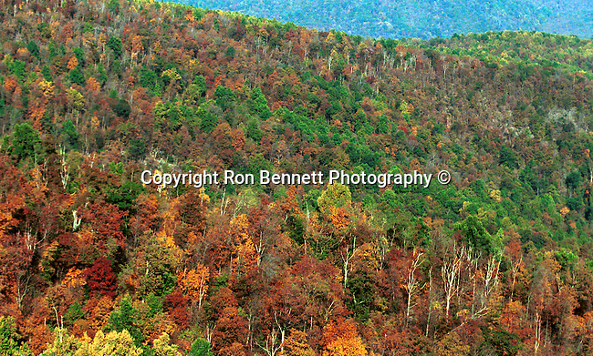 Autumn Leaves Sky Line Drive Blue Ridge Mountains Commonwealth of Virginia, Fine Art Photography by Ron Bennett, Fine Art, Fine Art photography, Art Photography, Copyright RonBennettPhotography.com ©