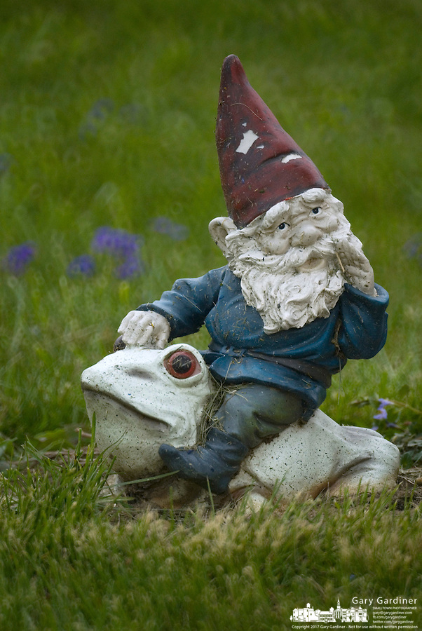 A garden gnome rides a frog or toad in deep grass in Ohio.<br />