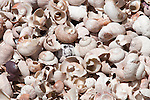 Sea shells on sea shore, Cape Peninsula, Table Mountain national park,Western Cape, South Africa