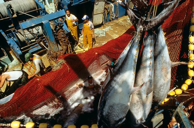 Peche aux thons en Mediterranee. *** Tunny-fishing, Mediterranean.