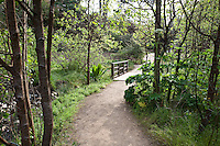 Dirt path through alder and poplar trees in early spring at Menzies California native plant garden, San Francisco Botanical Garden