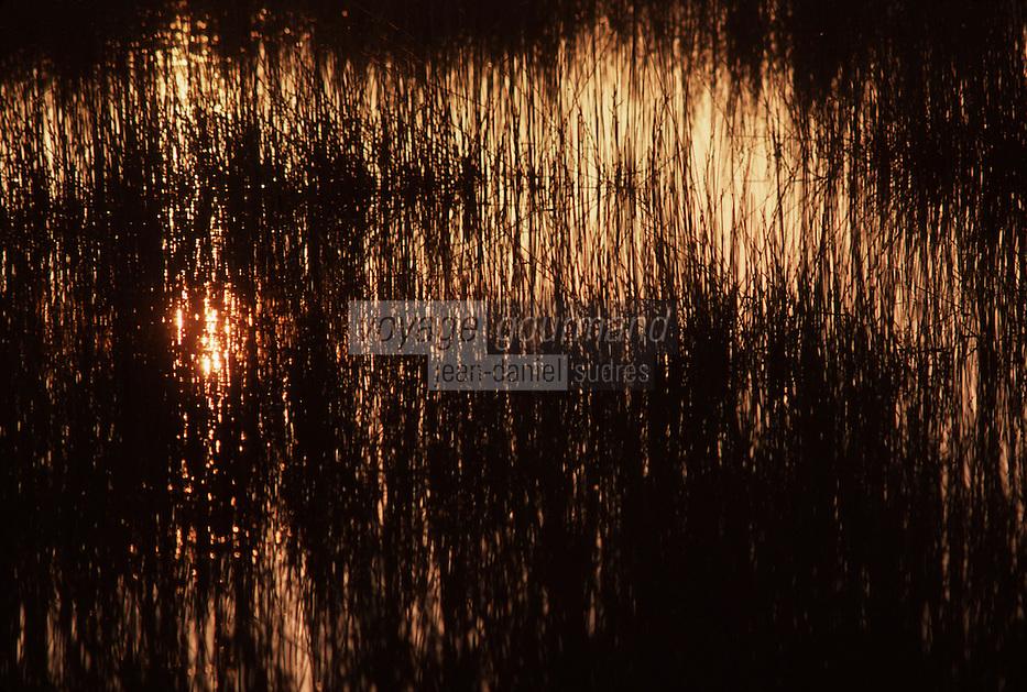 Europe/France/Provence-Alpes-Côtes d'Azur/13/Bouches-du-Rhône/Parc Naturel Régional de Camargue: Soleil couchant sur les herbes du marais