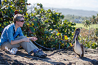 Birder Elyn Stubblefield with a Brown Pelican (Pelecanus occidentalis occidentalis), juvenile at Punta Las Tunas, Arecibo, Puerto Rico.