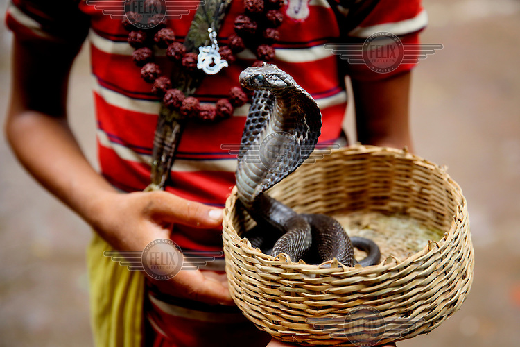 A snake charmer with a cobra emerging from a basket.