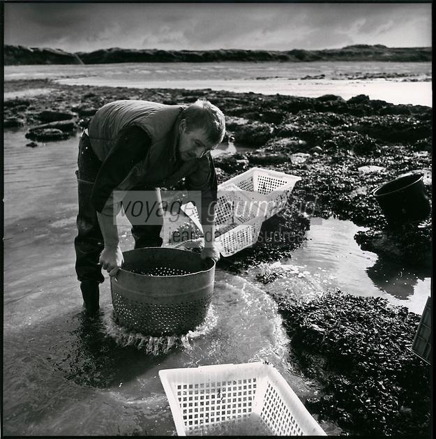Europe/France/Nord-Pas-de-Calais/Pas-de-calais/62/ Ambleteuse: Hugues Seillier récolte les moules sauvages