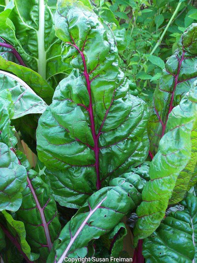 Garden and Farm photos