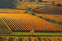 A view over the vineyards in Bergerac at Chateau Belingard in evening sunshine in autumn giving the wines a golden glow Chateau Belingard Bergerac Dordogne France