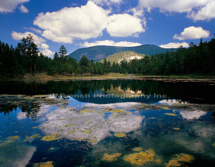 Escudilla Mountain, Halsey Lake, White Mountains