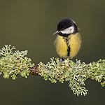Best of British Birds