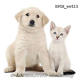 Xavier, ANIMALS, REALISTISCHE TIERE, ANIMALES REALISTICOS, FONDLESS, photos+++++,SPCHWS613,#A#