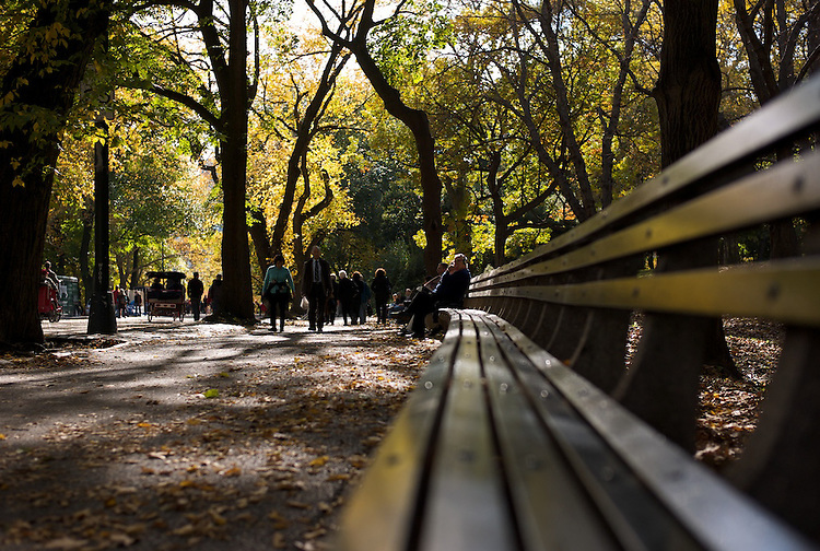 Street shooting with Leica M8. New York City (Manhattan, USA).  Central park bench with the fal trees as a background.