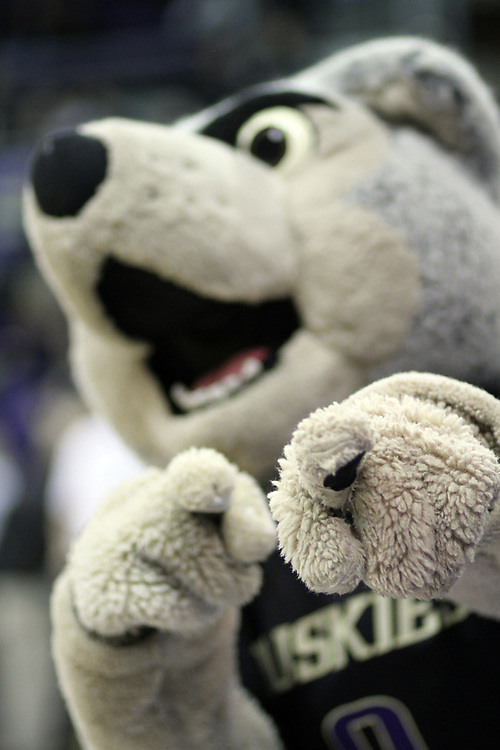 Washington mascot, Harry the Husky, hams it up during the Huskies Pac-10 conference home game against arch-rival Washington State at Bank of America Arena in Seattle, Washington, on January 30, 2010.