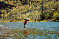 Catch and release trout fishing Green river Utah. Fly fisherman in very red jacket casting for trout.