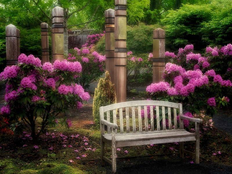 Rhododendrons and bench. The Oregon Garden. Silverton, Oregon