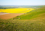 View over Pewsey Vale from chalk scarp slope of Milk Hill, Alton Barnes, Wiltshire, England