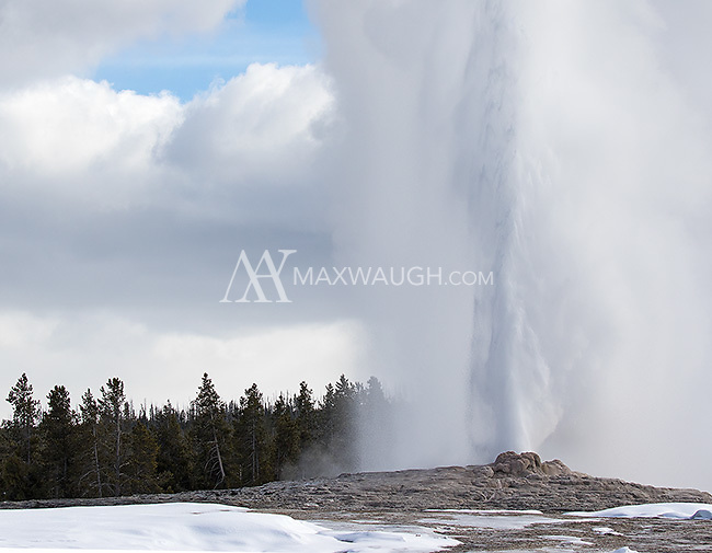 Old Faithful erupts.