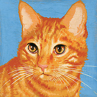 Portrait of ginger cat ExclusiveImage