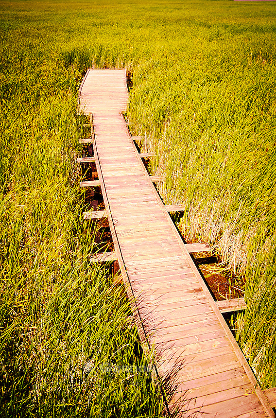 Boardwalk in Marsh in Point Pelee National Park