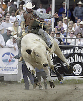 "29 Aug 2004: PRCA Rodeo Bull Rider Myron Duarte ranked 5th in the world riding the bull ""Close Call""  during the PRCA 2004 Extreme Bulls competition in Bremerton, WA. Myron won the overall competition with a combined score of 176."