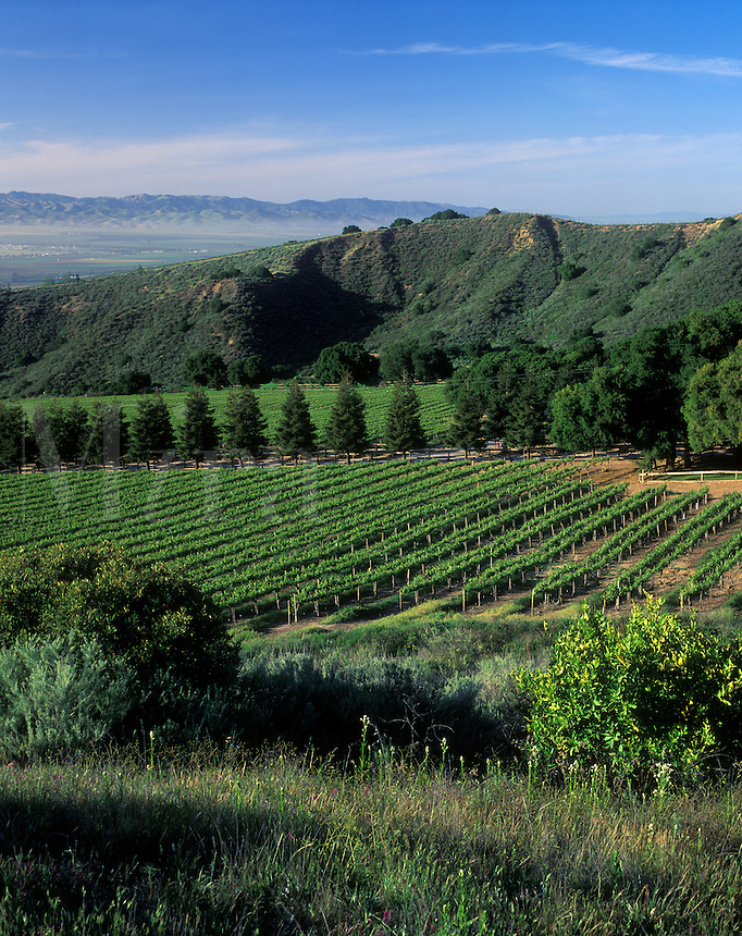 SMITH & HOOK/HAHN ESTATES Vineyard has a spectacular view across the SALINAS VALLEY to the GABILAN MNTS. - CALIF.